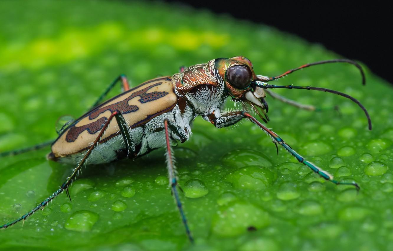 Пресноводные насекомые вытесняют наземных собратьев на планете thumbnail