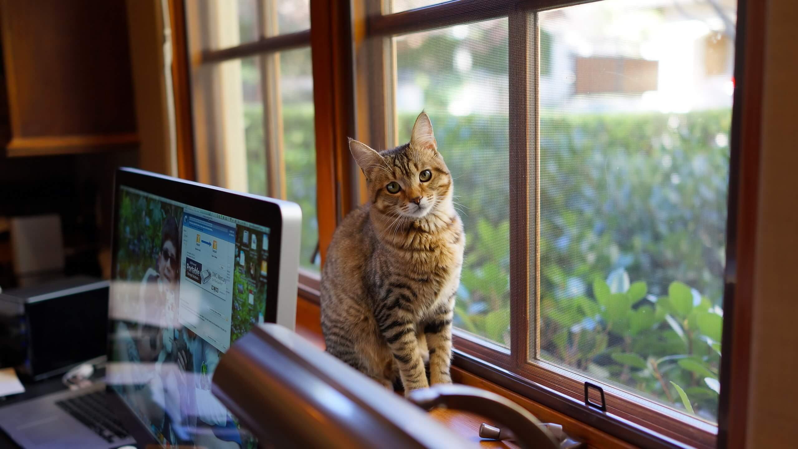 Кот в доме. Фото: