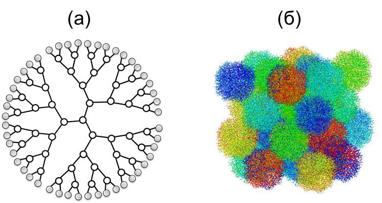 Рис. 1 (а) – схематическое изображение молекулы дендримера, (б) – мгновенный снимок модельного расплава дендримеров