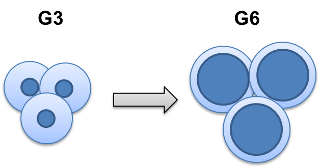 Рис. 2. Изменение степени взаимопроникновения дендримеров в расплаве с увеличением генерации