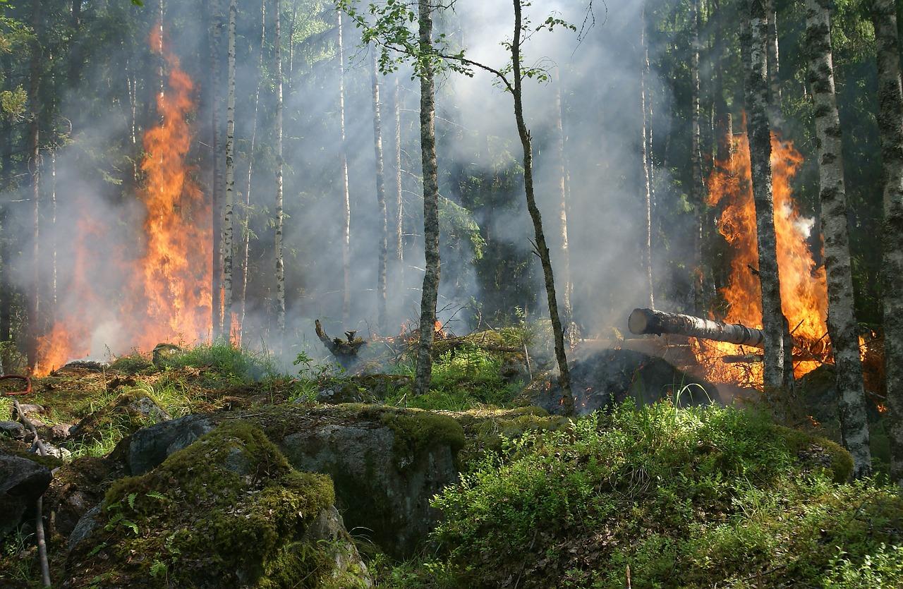 Число лесных пожаров в Крыму выросло в пять раз