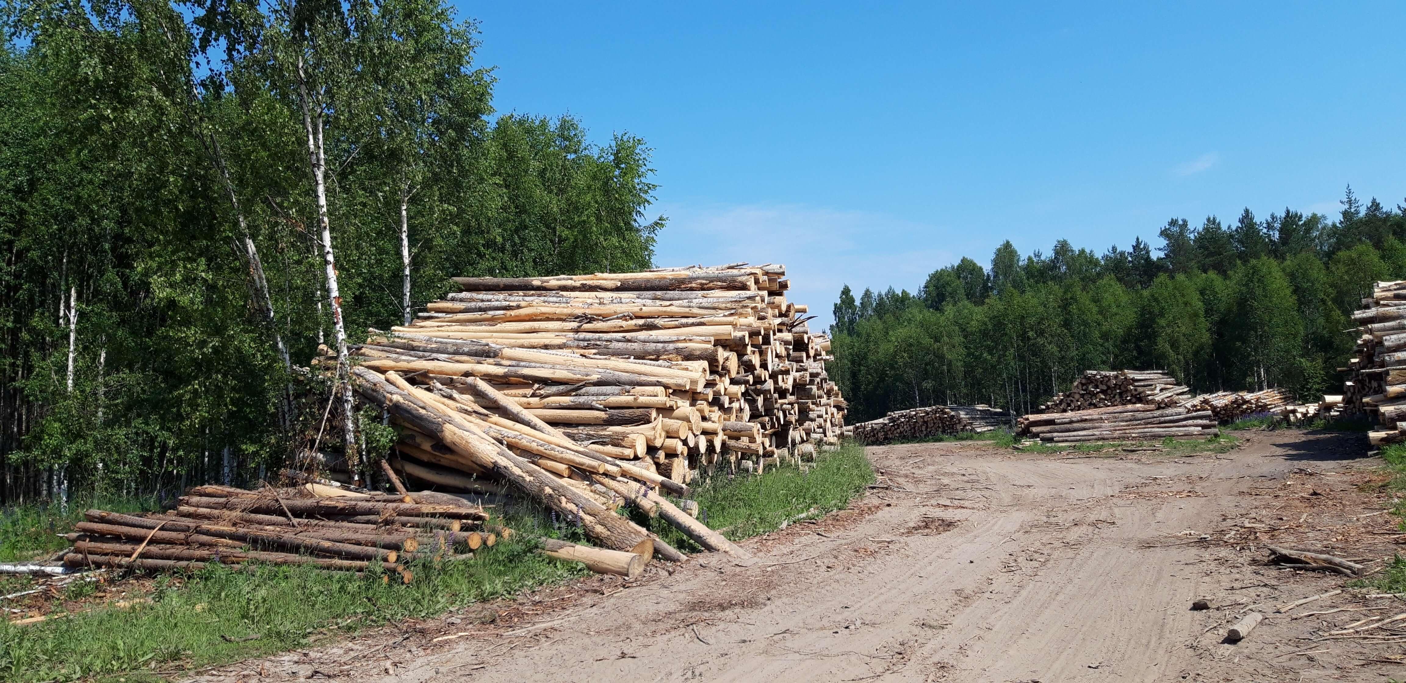 Лес в Подмосковье