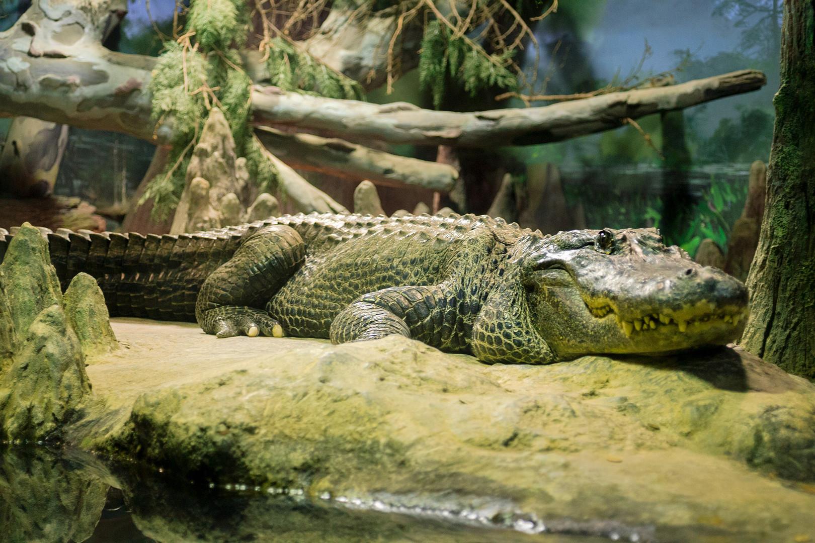 Крокодил Сатурн