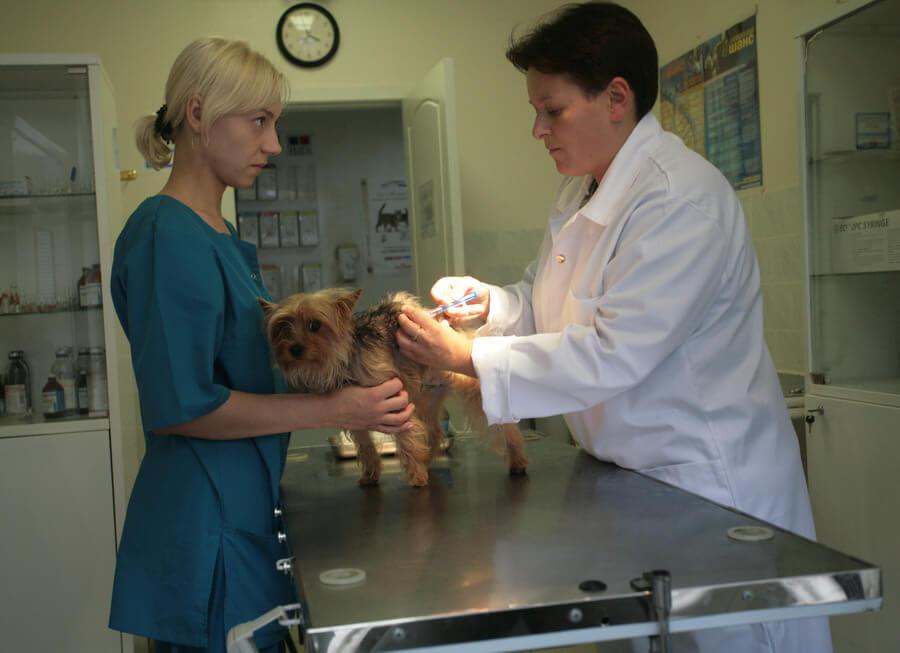 Вакцинация домашних животных