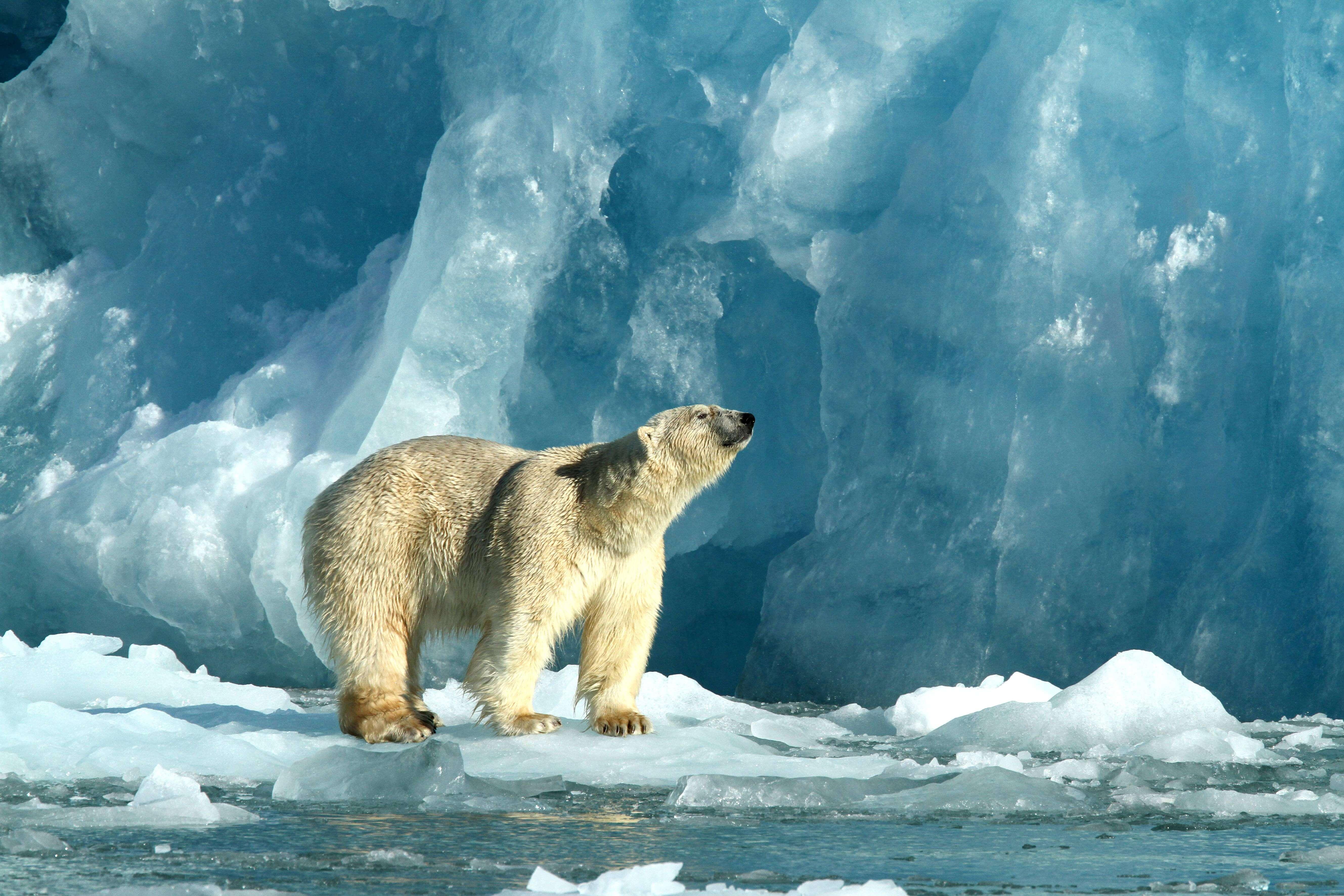 К концу века в Арктике потеплеет на 20 градусов